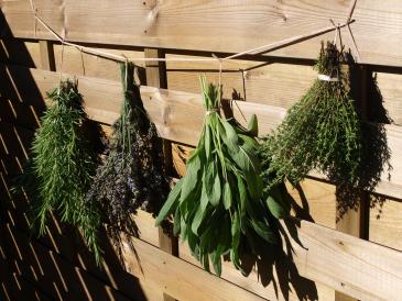 tipps f r das trocknen von heilpflanzen heilpflanzenrezepte mehr. Black Bedroom Furniture Sets. Home Design Ideas