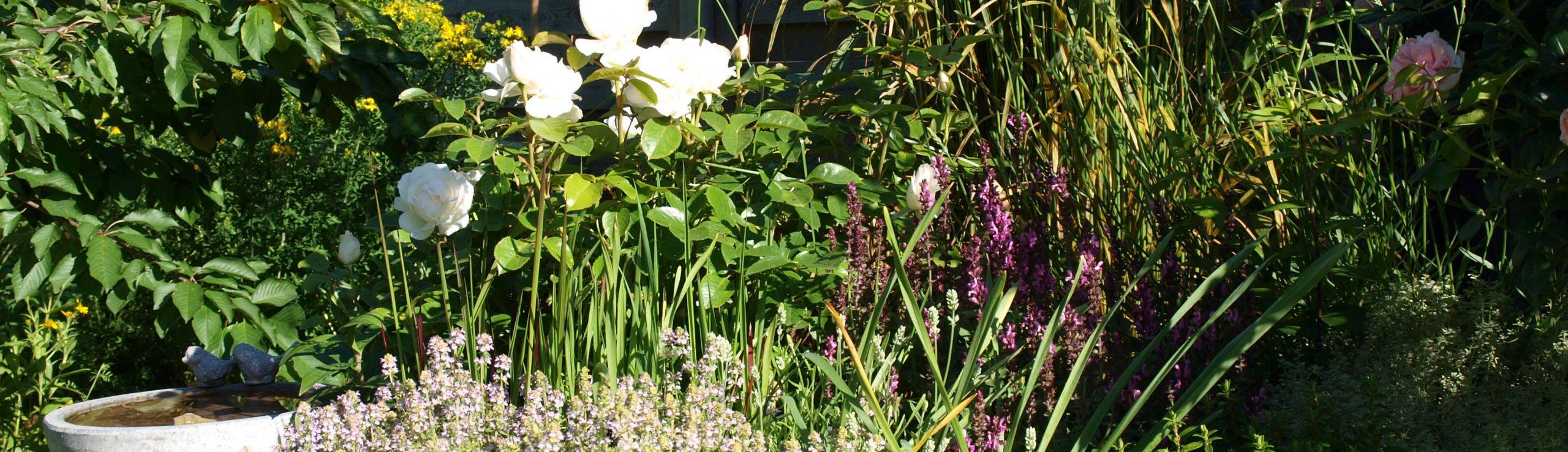 Heilpflanzenrezepte & mehr